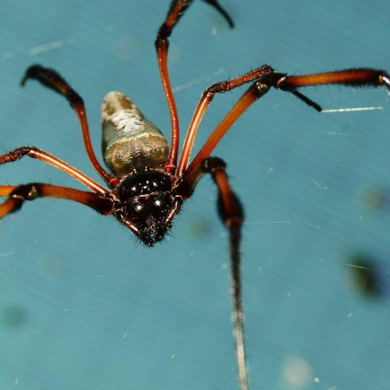 BULLOCKkerryn - land invertebrates