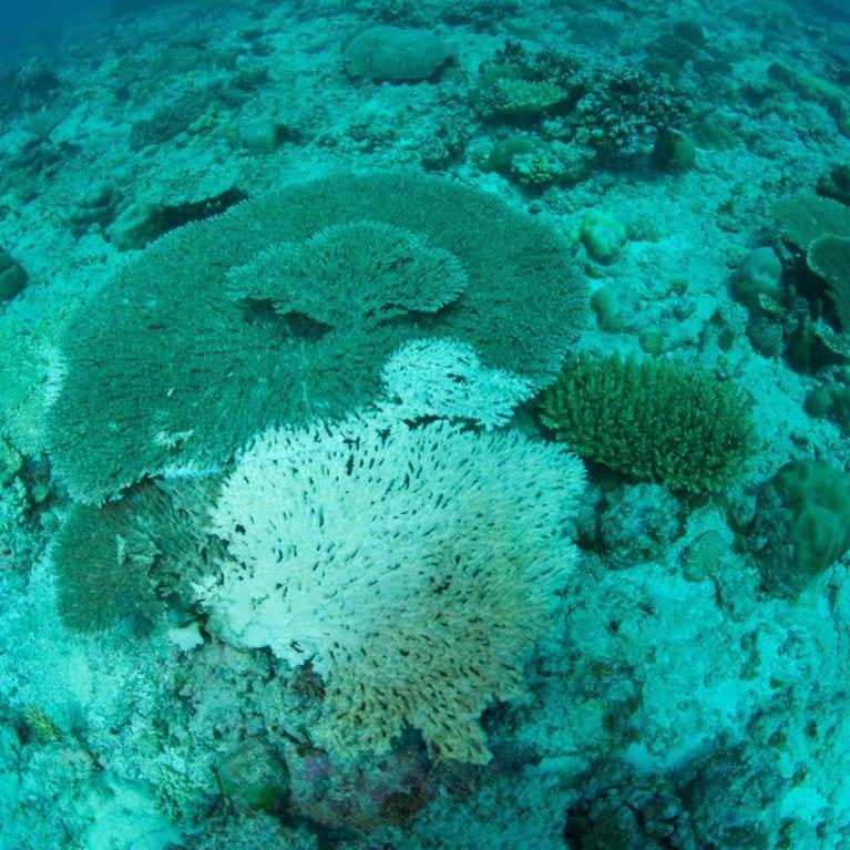 BULLOCK kerryn - coral bleaching