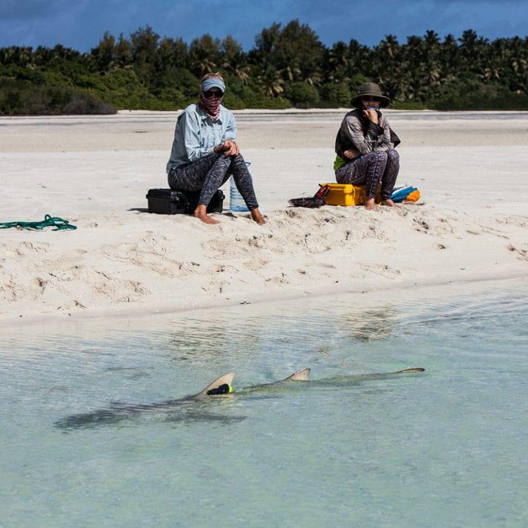 DALY-Ryan---Lemon-Shark-with-observers