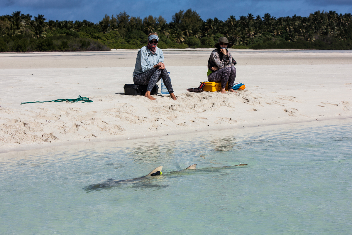 DALY-Ryan---Lemon-Shark-activity-tracker