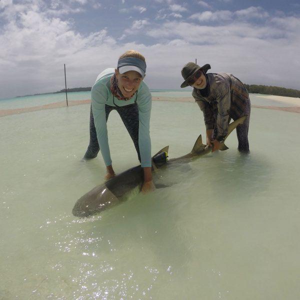 Activity Trackers for Sharks II: Captivity