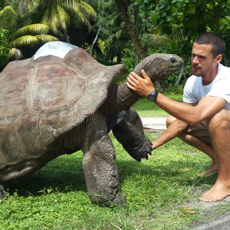 The Aldabra giant tortoise Petit Four (non-French speakers on the island call him P-2-4) is a special part of the D'Arros team. Weighing more than 150 kilograms, he originally came from Aldabra Island and is thought to be 100 years old. Aldabra giant tortoises are endemic to the islands of Aldabra and the Seychelles. Photo by Philippa Ehrlich | © Save Our Seas Foundation