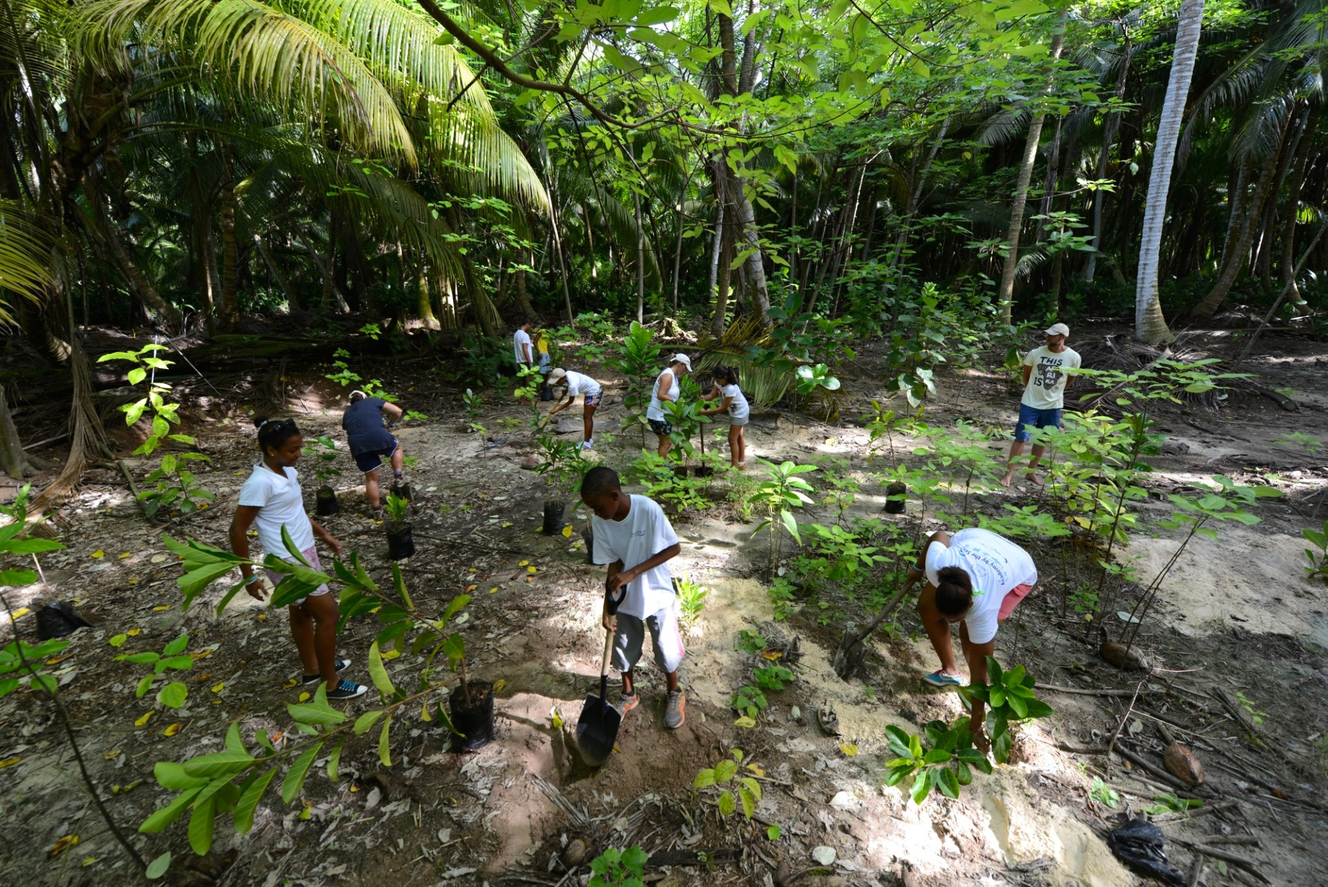 Teenagers plant indigenous saplings during the D'Arros Experience. In an effort to inspire young Seychellois and share D'Arros and St Joseph with them, the Save Our Seas Foundation ran these environmental education camps for two years. Photo by Michael Scholl | © Save Our Seas Foundation