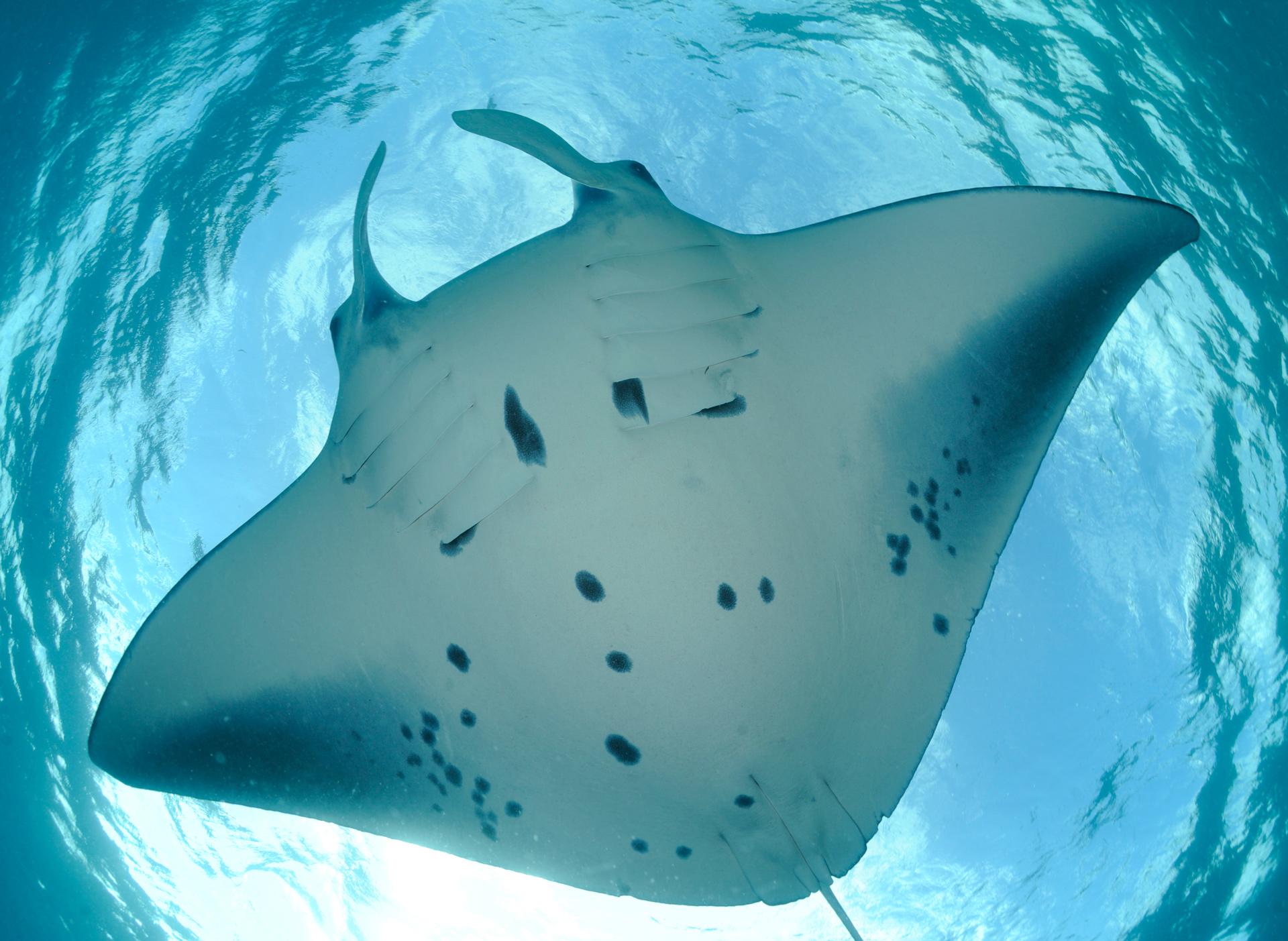 PEELlauren - spotting manta spots