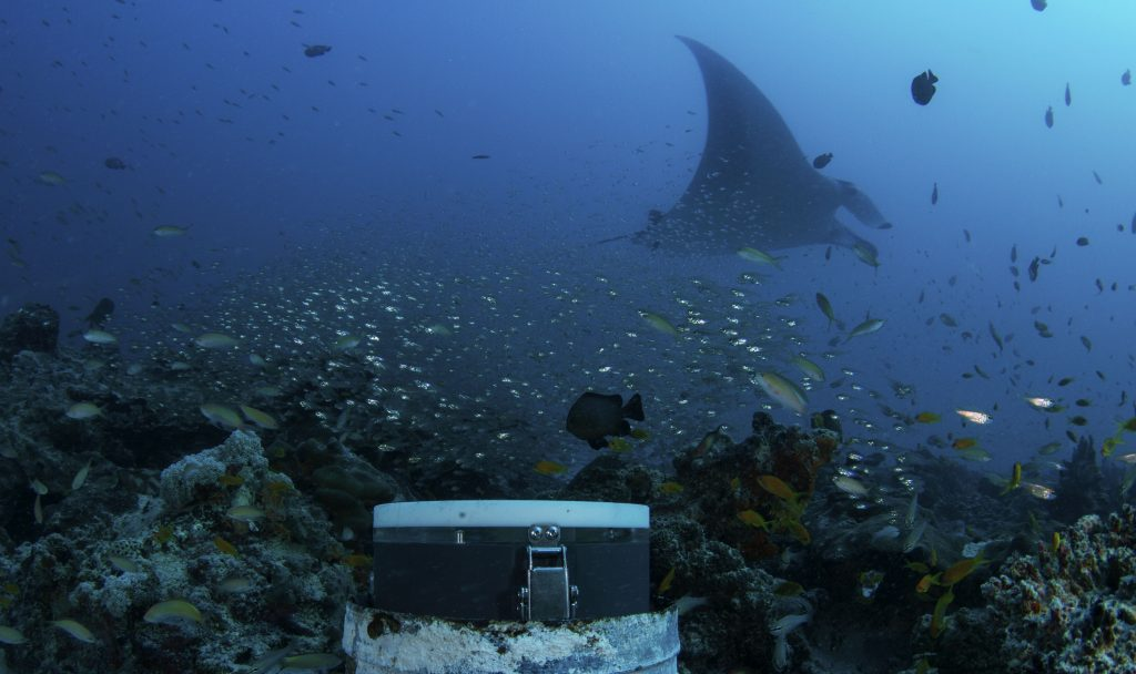 manta ray, MantaCam, Luke Gordon, Dive D'Arros Island