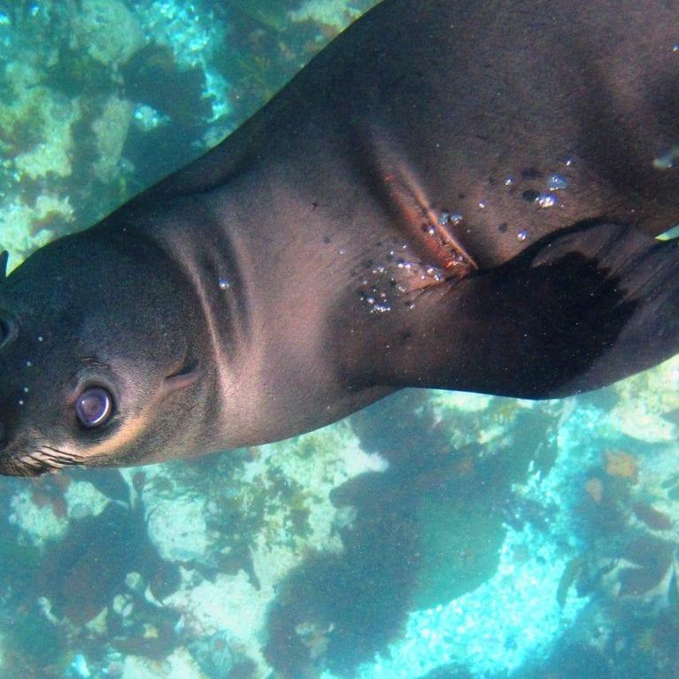 Youth Ocean Ambassadorship: Seals and fish