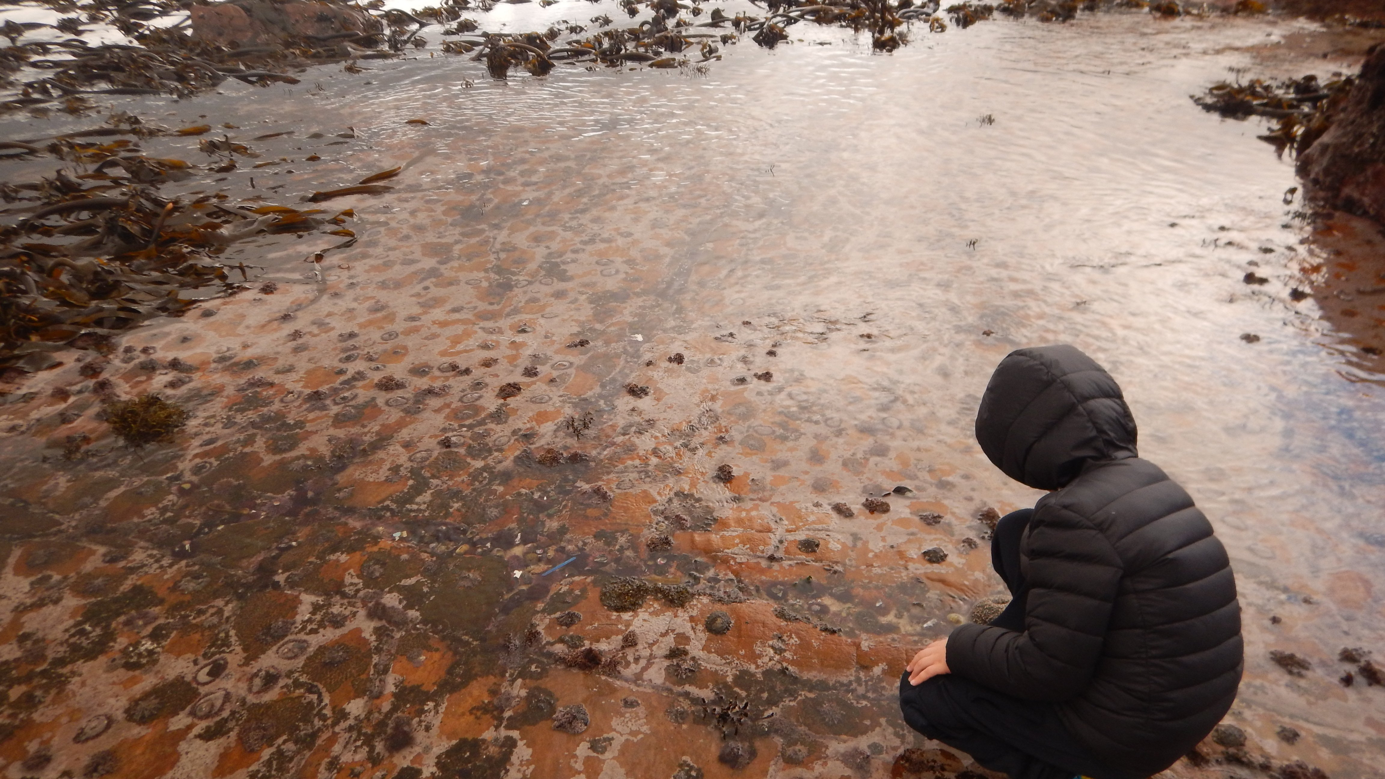 Quietly surveying limpet city