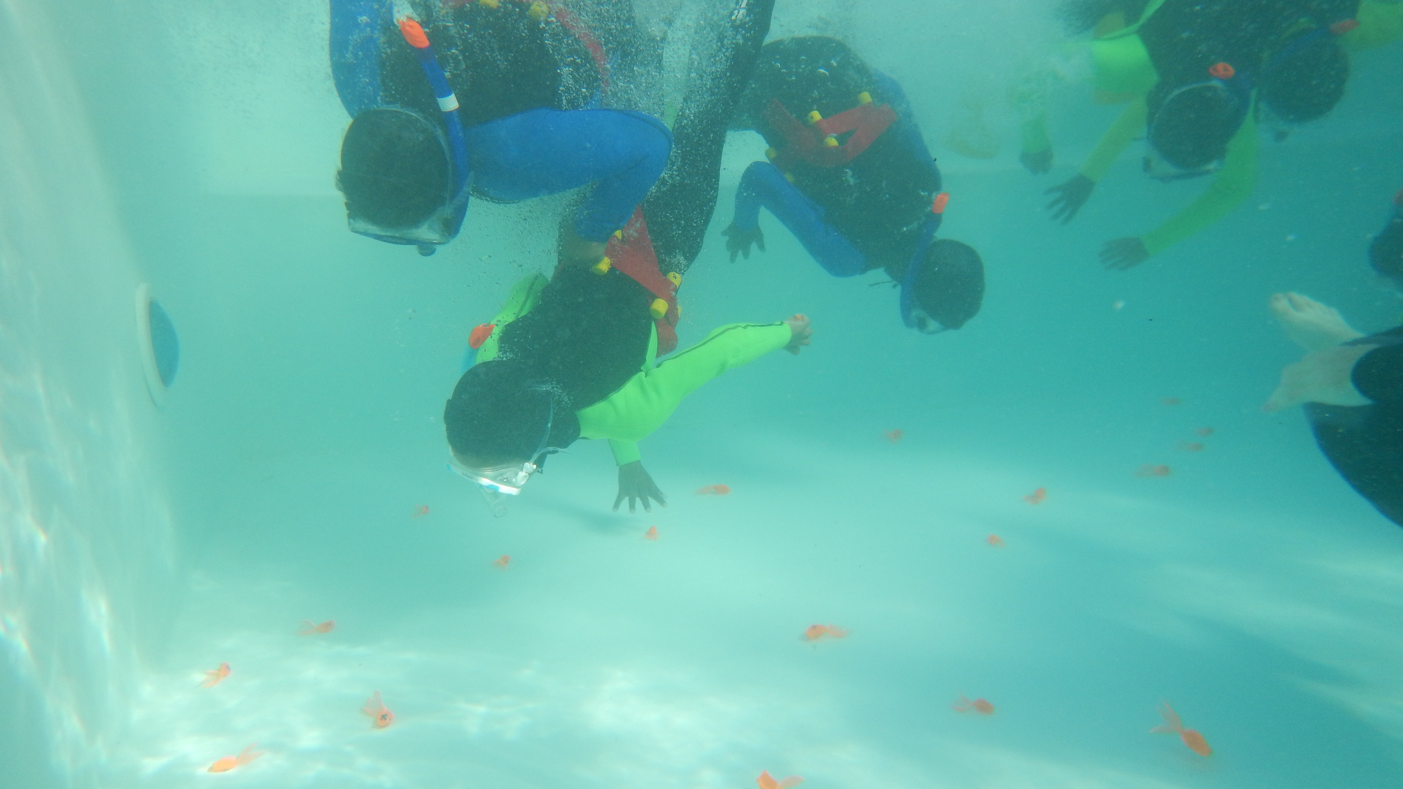 Trying to find Nemo