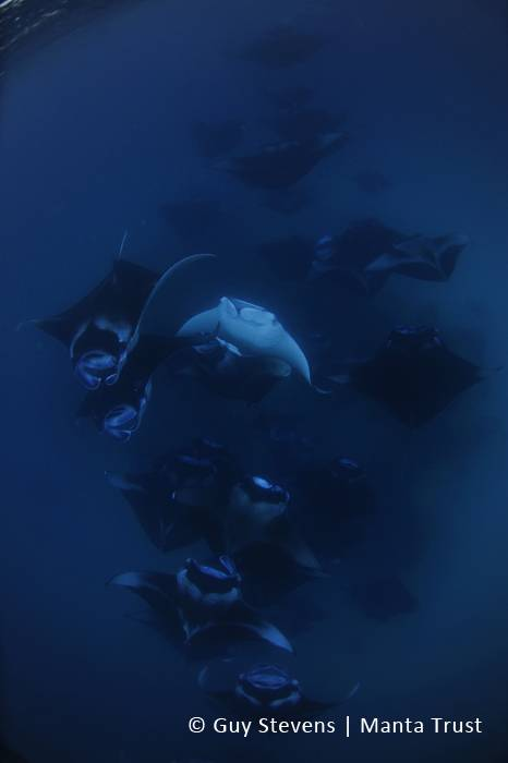 STEVENS Guy - Reef Manta Ray Mass Feeding