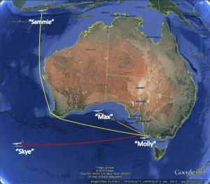 Charlie Huveneers - blue sharks tagged