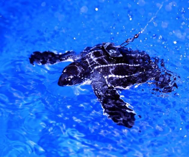 Jeanette Wynecken - Turtle 1