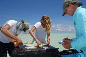 Ornella Weideli - Measuring a juvenile lemon shark