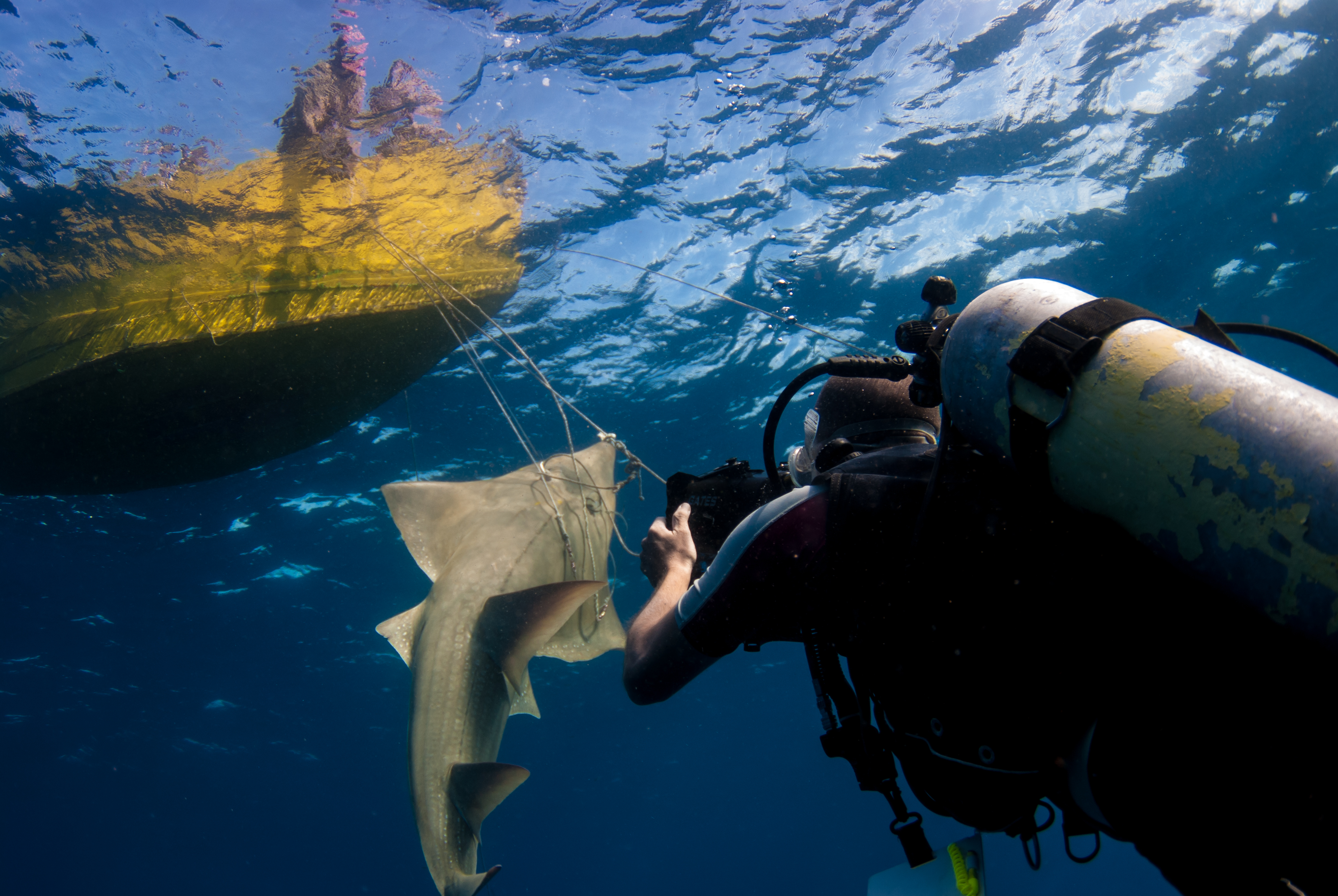 Chris Scarffe Filming A Guitar Fish For Shark FInning Documentary Shiver (Copyright C.J Coetzee)