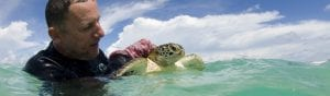 PILCHER Nick - Sea Turtles Malaysia