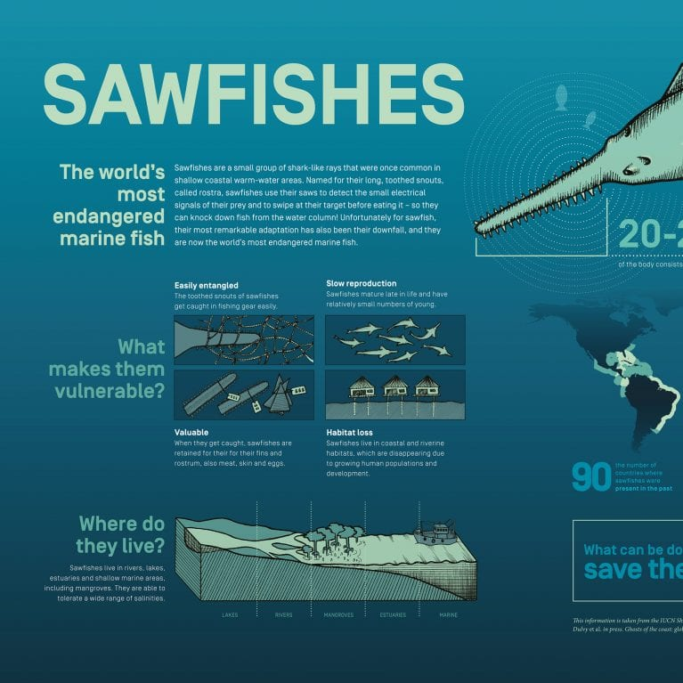sawfish, infographic, marine, science, endangered, animal, sawfish conservation, ray, conservation