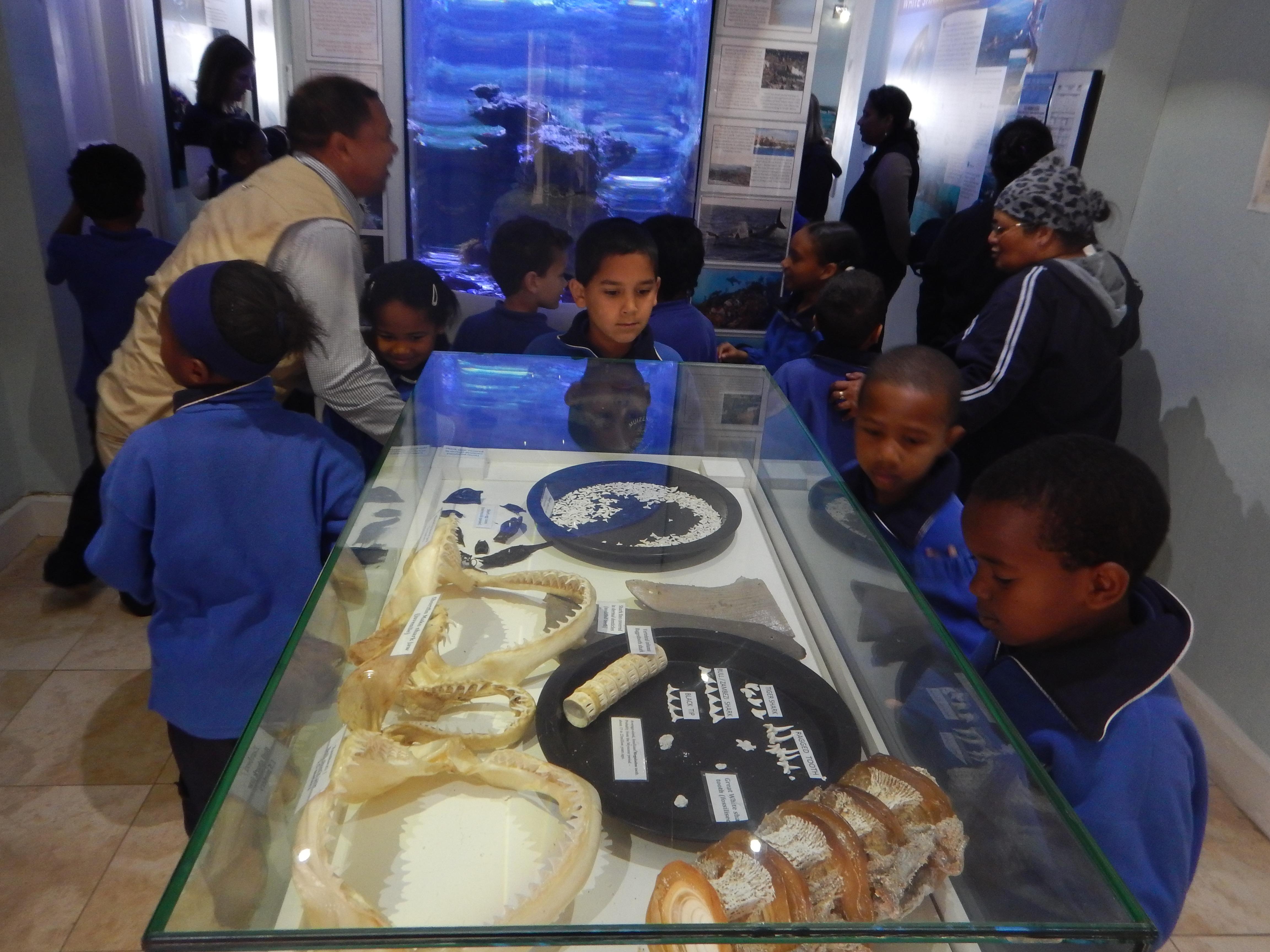 MILLAR paul - sharks kids teeth