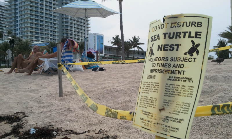 A marked turtle nesting site.