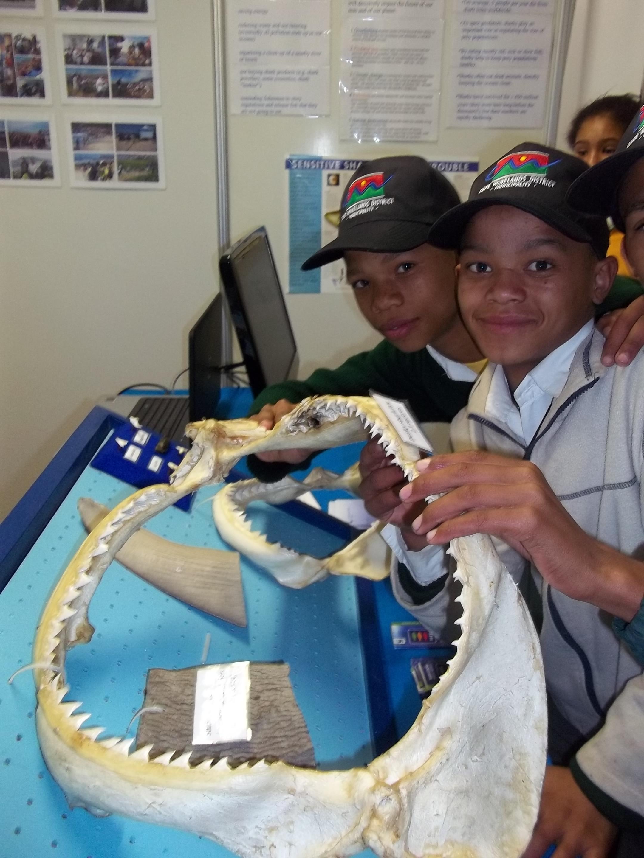 MILLAR paul - shark teeth kids teeth