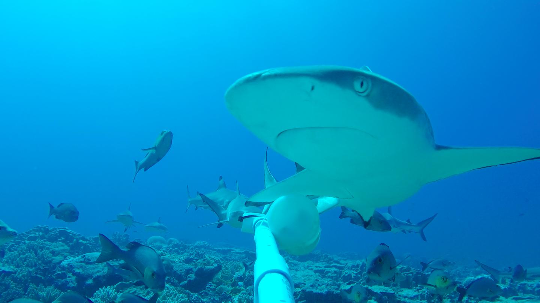 BRADLEY darcy - reef shark hypnosis full