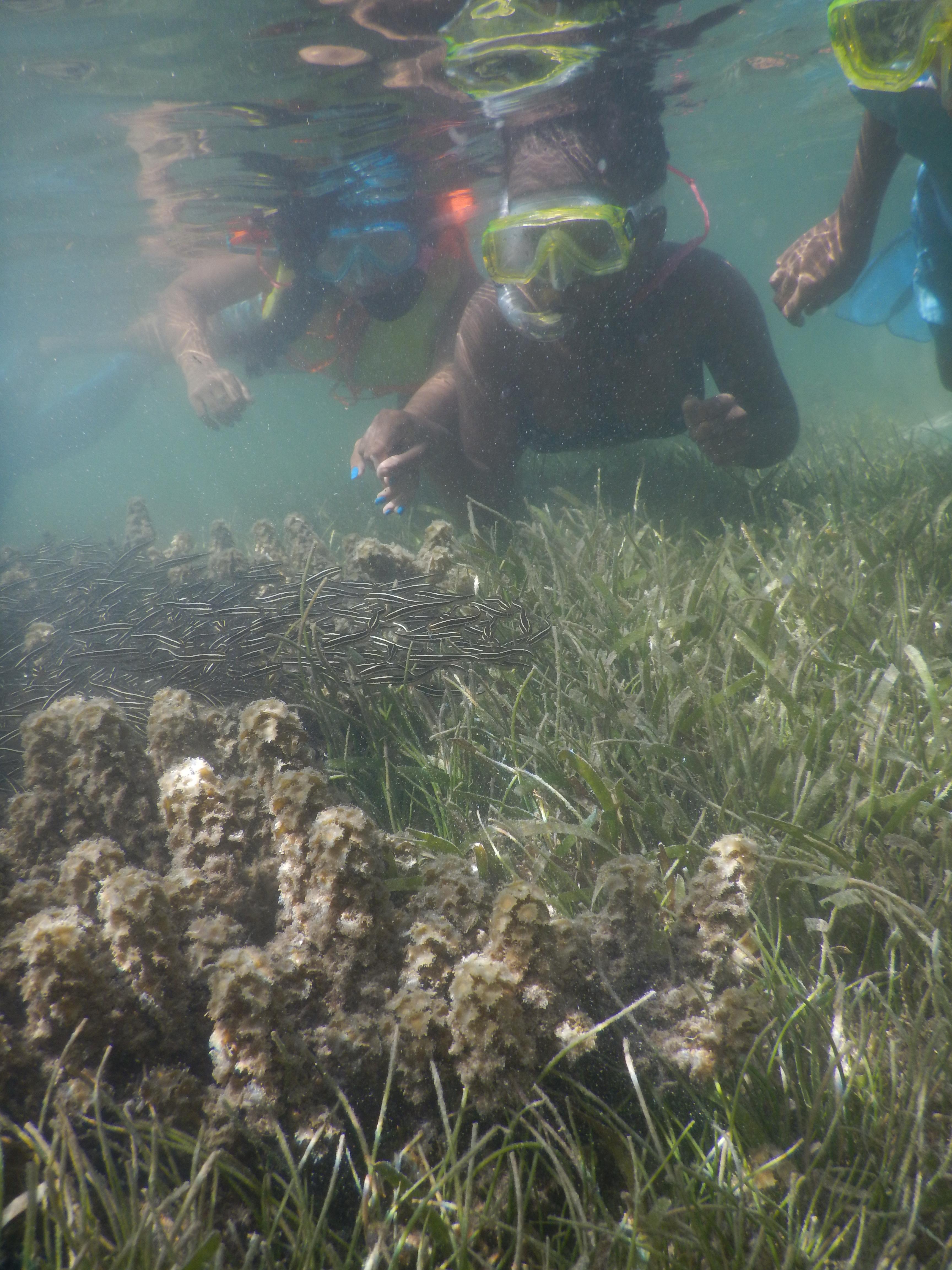 MARCH abi - motivated marine explorers Peninnah