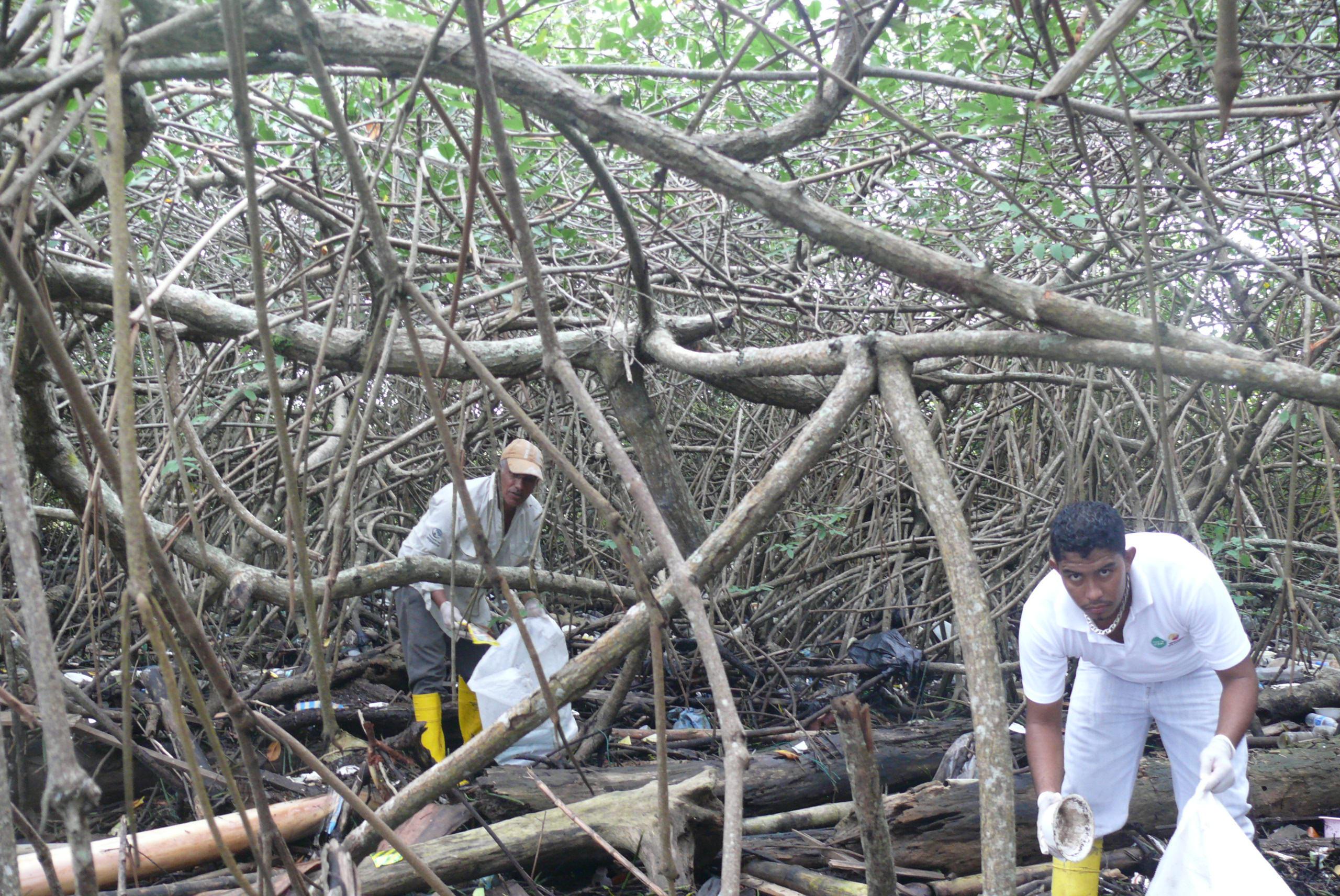 Cleaning up in the mangroves at Esmeraldas, Ecuador.