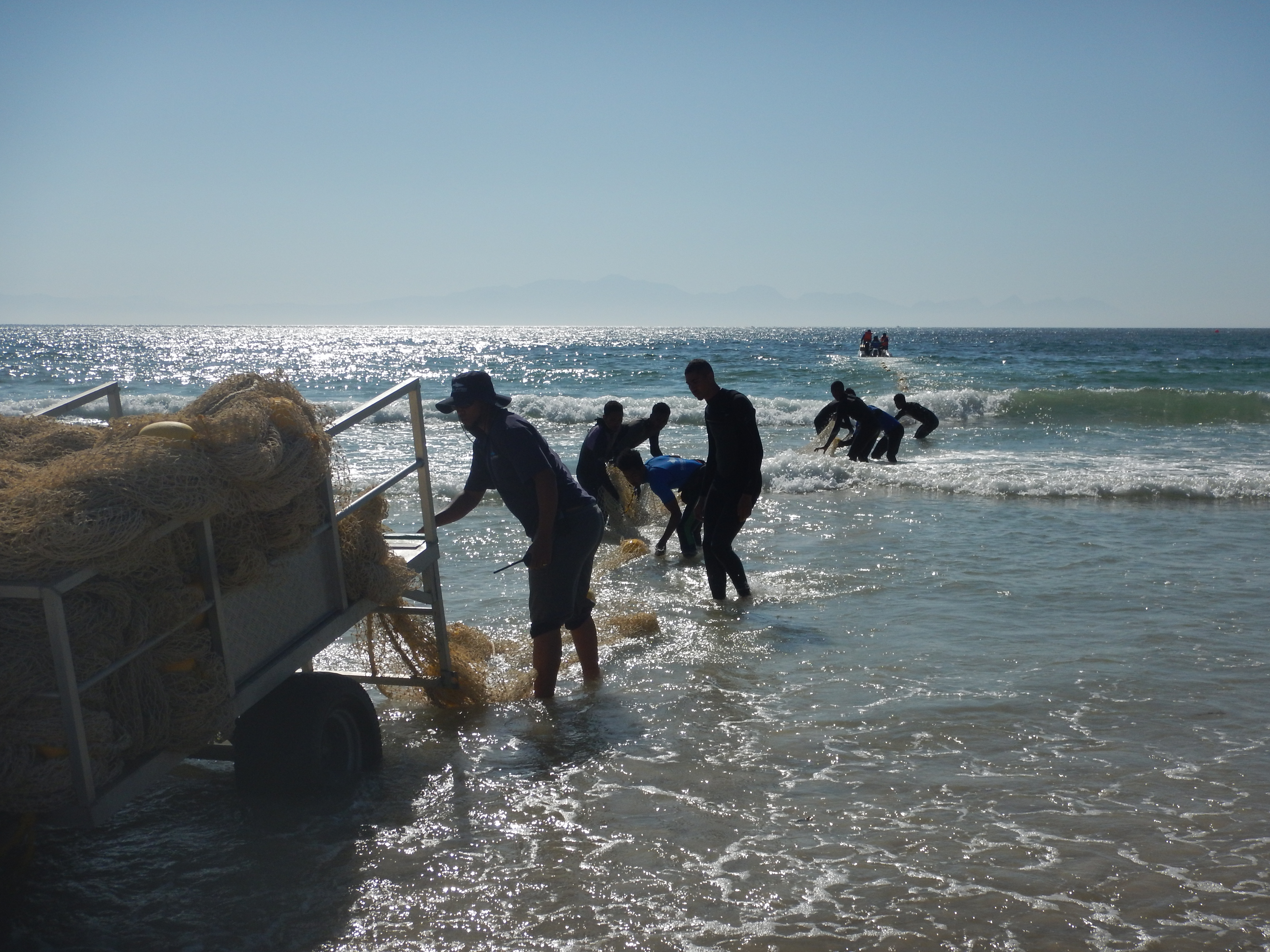 Setting up the shark exclusion net.