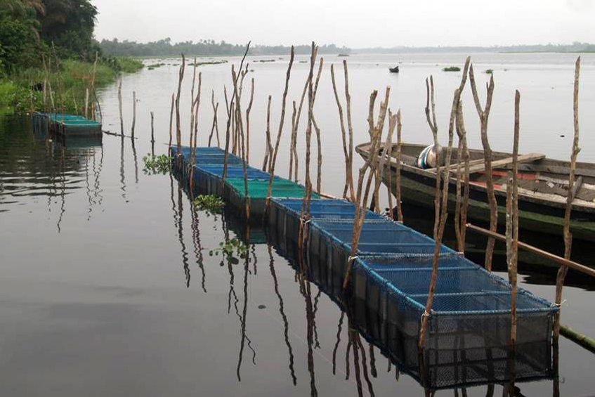 Completed fish cages at Lekki Lagoon, Nigeria as part of a program to teach catfish aquaculture to former manatee hunters in exchange for them giving up hunting.