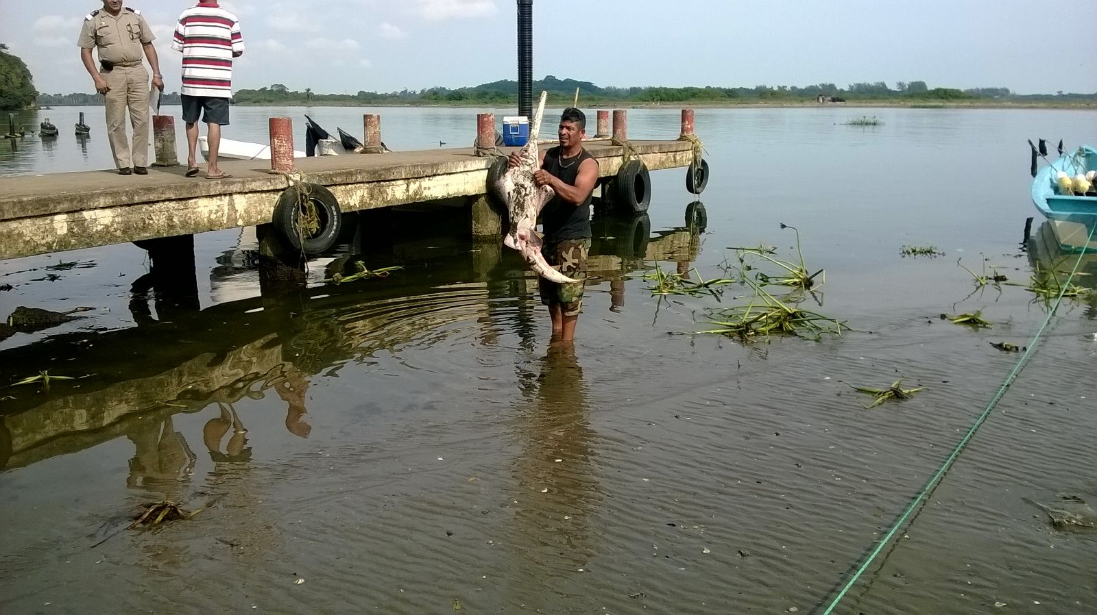 Fisherman Constantino Correa holds the smalltooth sawfish that he caught accidentally and reported to Project Pristis Mexico.