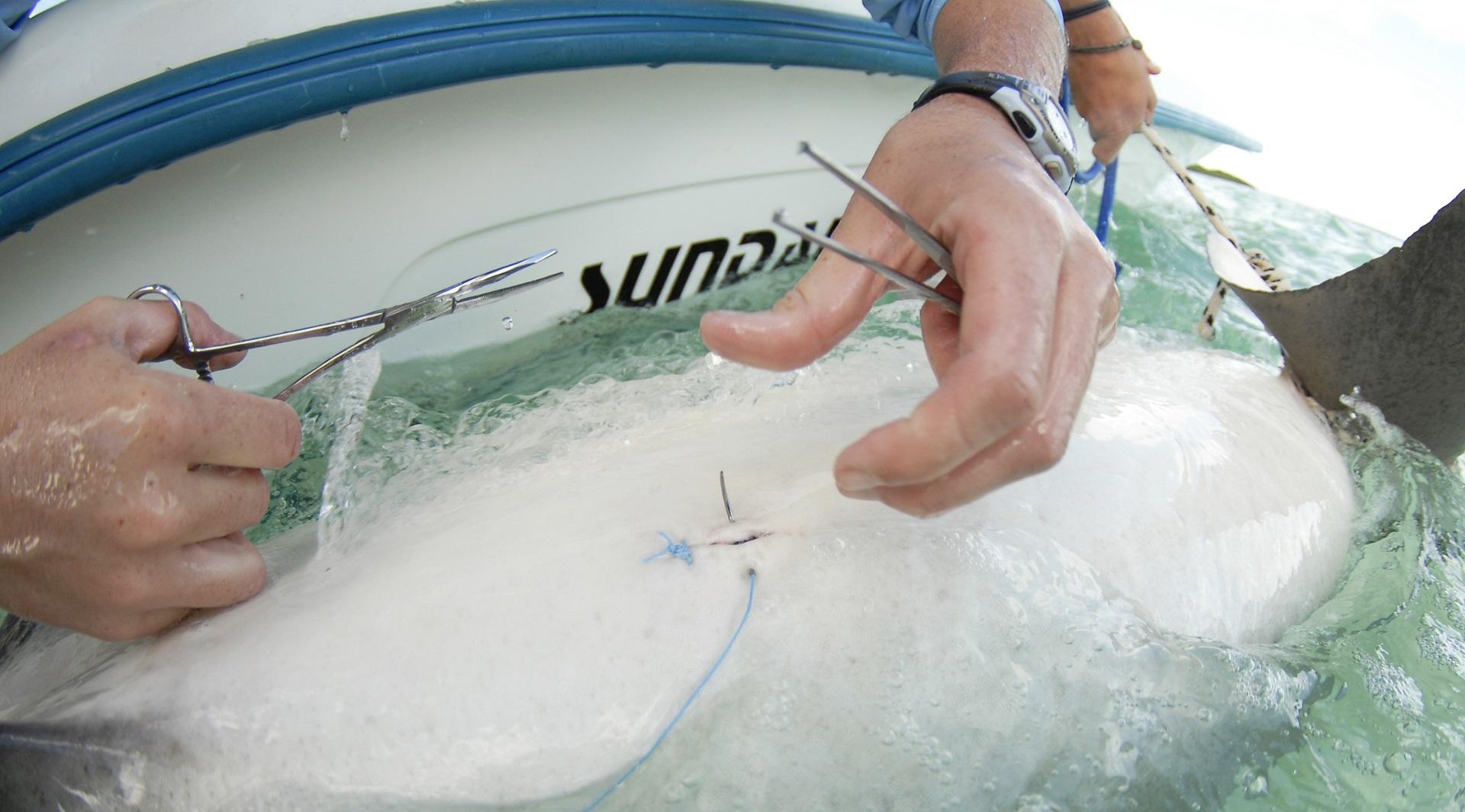 CASHMAN rachel - tagging