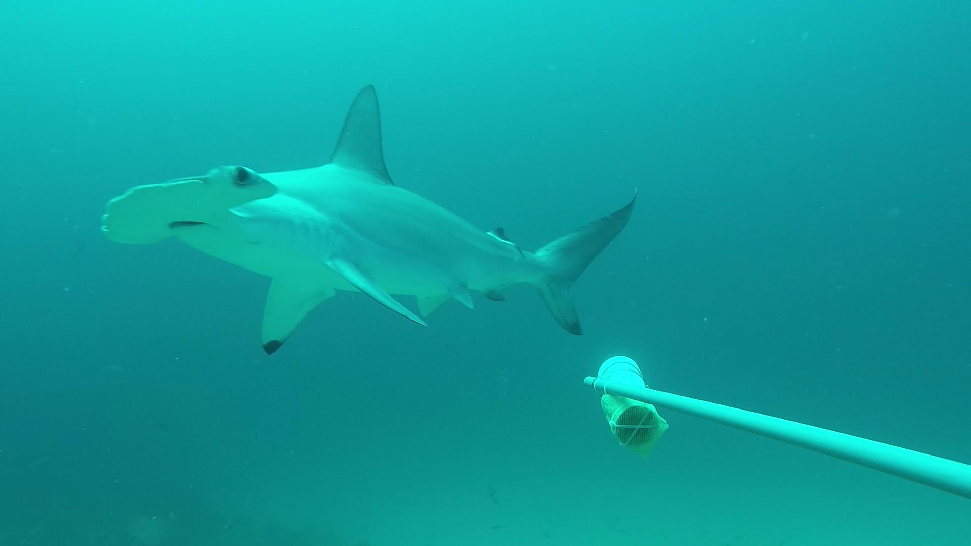 MARREROdavid - Galapagos underwater