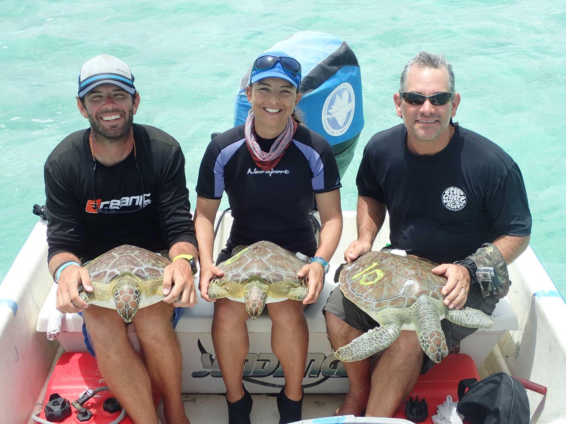 FUENTESmariana - turtles and sharks