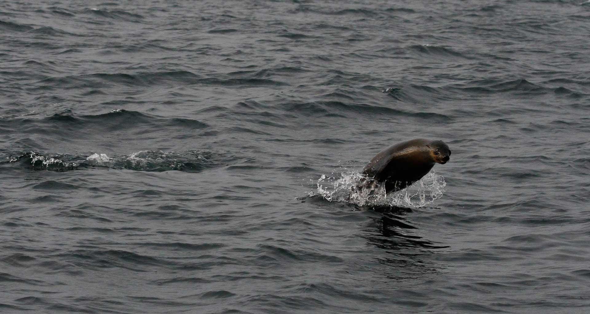 KOCKalison - a seal's survival guide