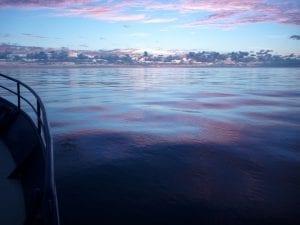 MUNROEsam_shark fishing in the deep