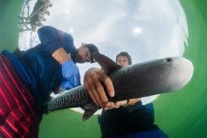 KITSIOSeugene_shooting for the sharklab