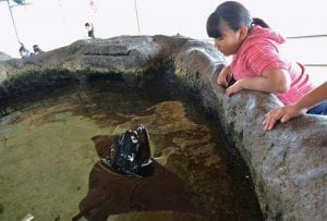 KINNEYfrances_ocean connectors: using shark research to inspire youth