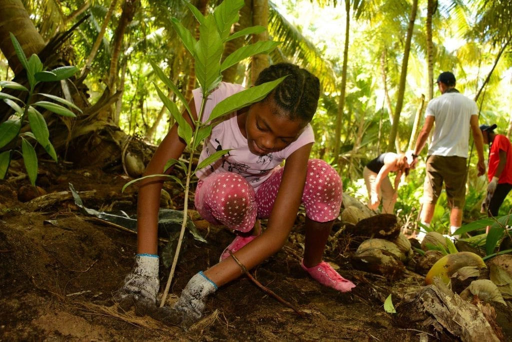 Twelve-year-old Stana Mousbe plants an indigenous sapling during the D'Arros Experience. In an effort to inspire young Seychellois and share the D'Arros and St Joseph Reserve with them, SOSF has run these environmental education camps for two years.