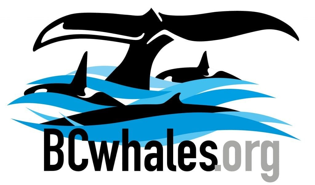 BC Whales | North Coast Cetacean Society (NCCS)