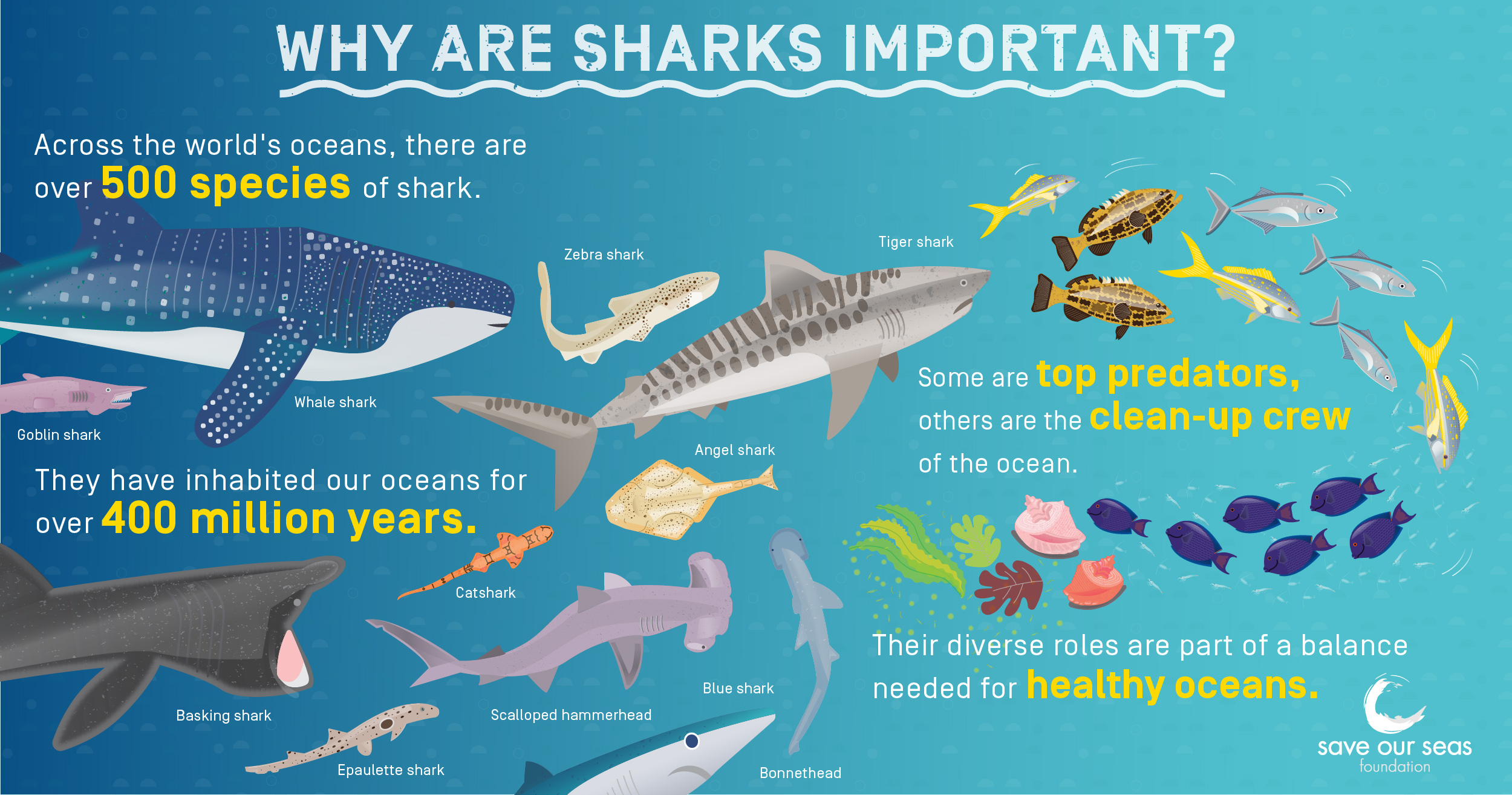 Why are sharks important? Why we need sharks.