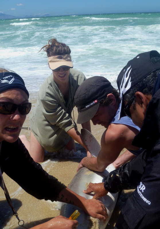 The RecFishSA team working quickly to tag and gather data