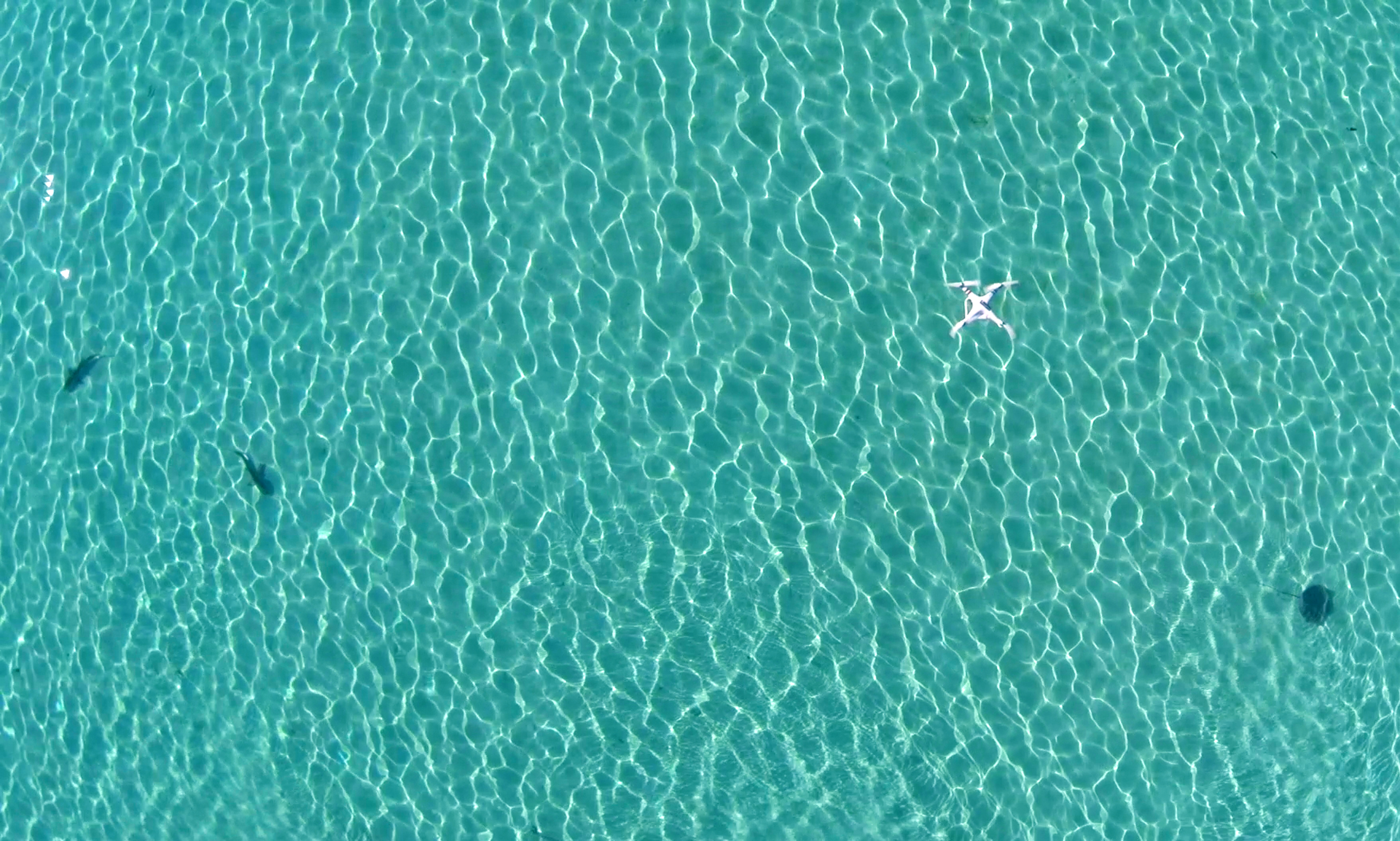 The drone flying over two blacktip reef sharks and a stingray.