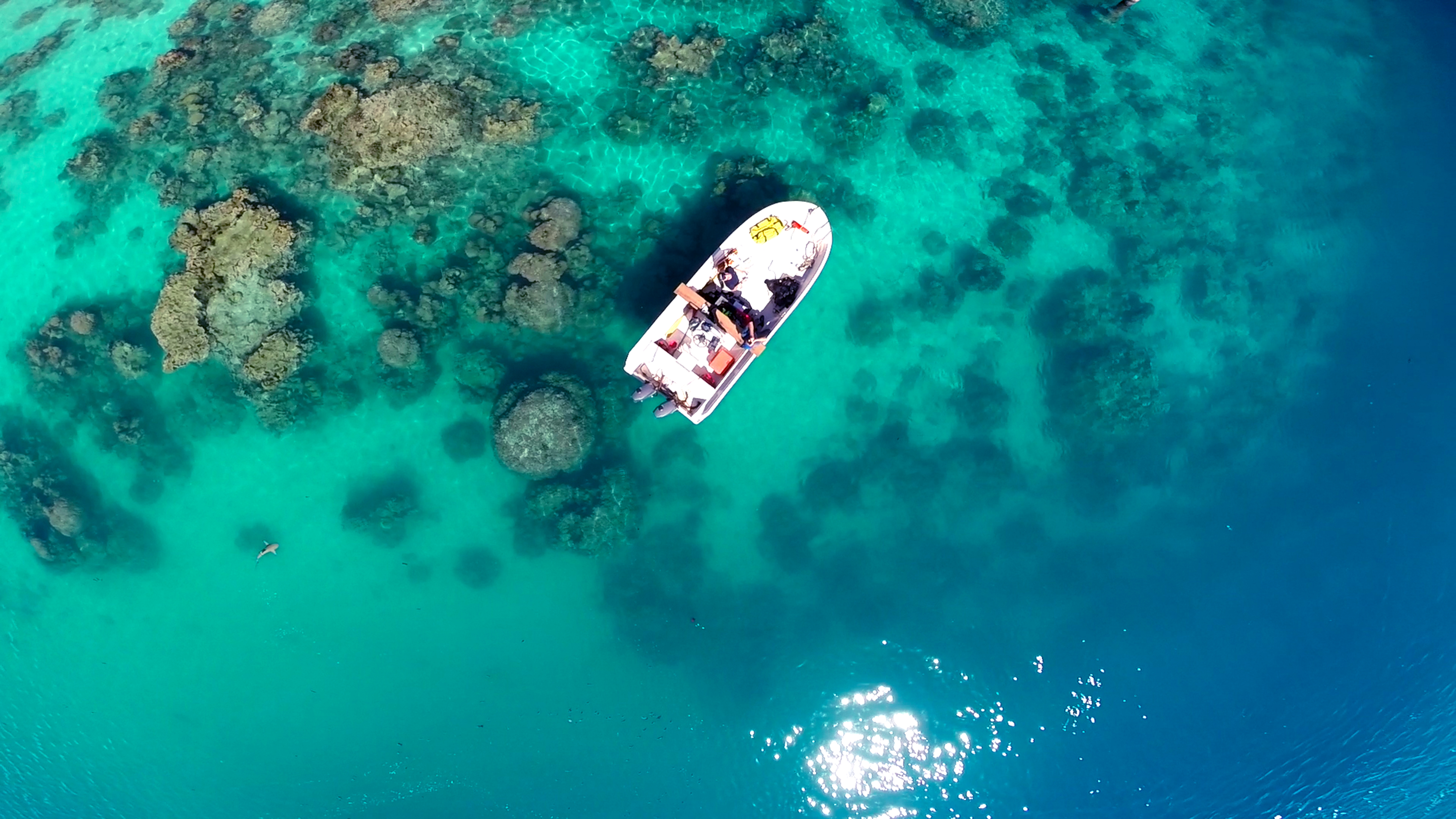 Flying over our boat, the drone recorded the presence of a blacktip reef shark (bottom left).