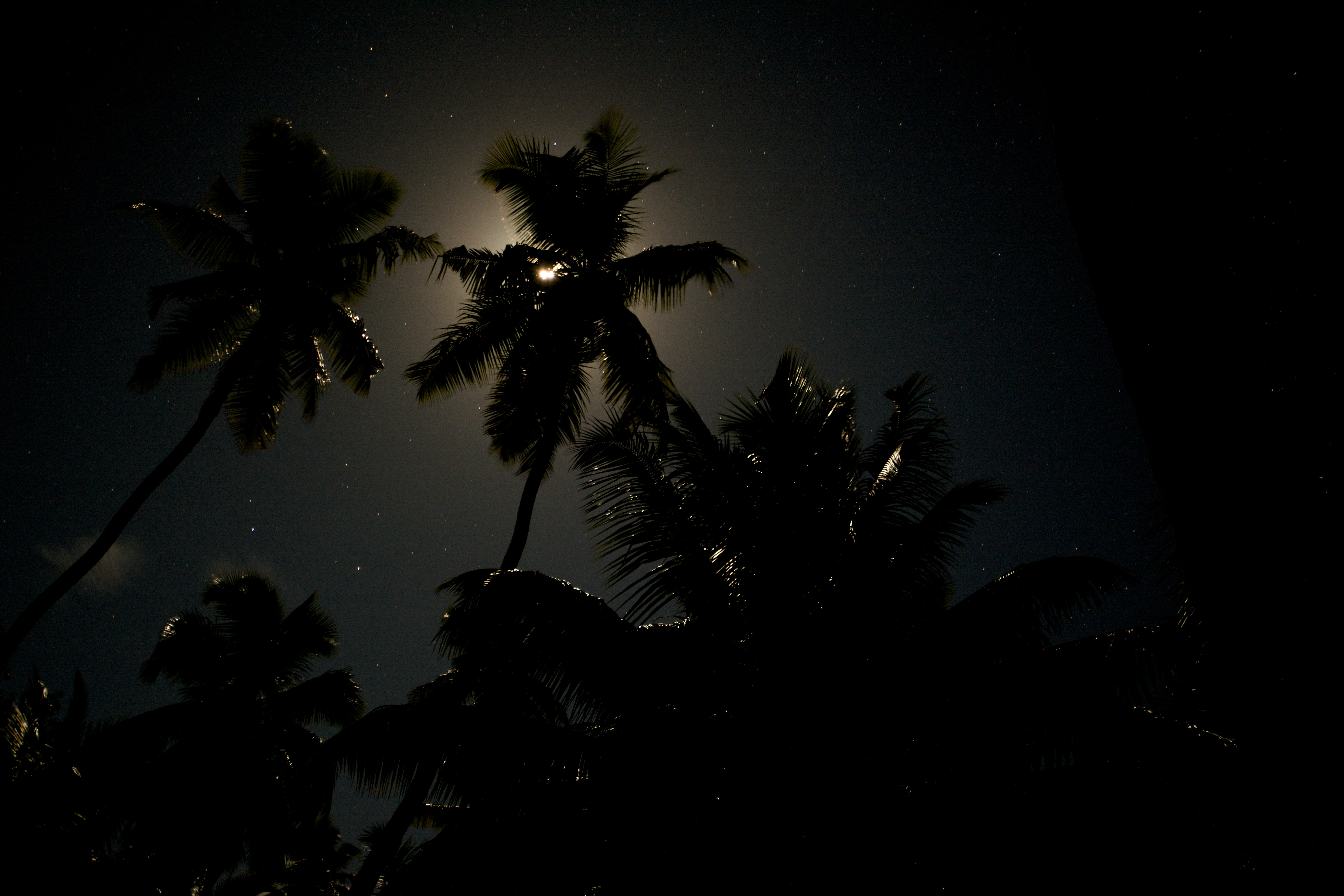 Full moon behind coconut trees at St Joseph Atoll. Photo by Chris Boyes |© Save Our Seas Foundation