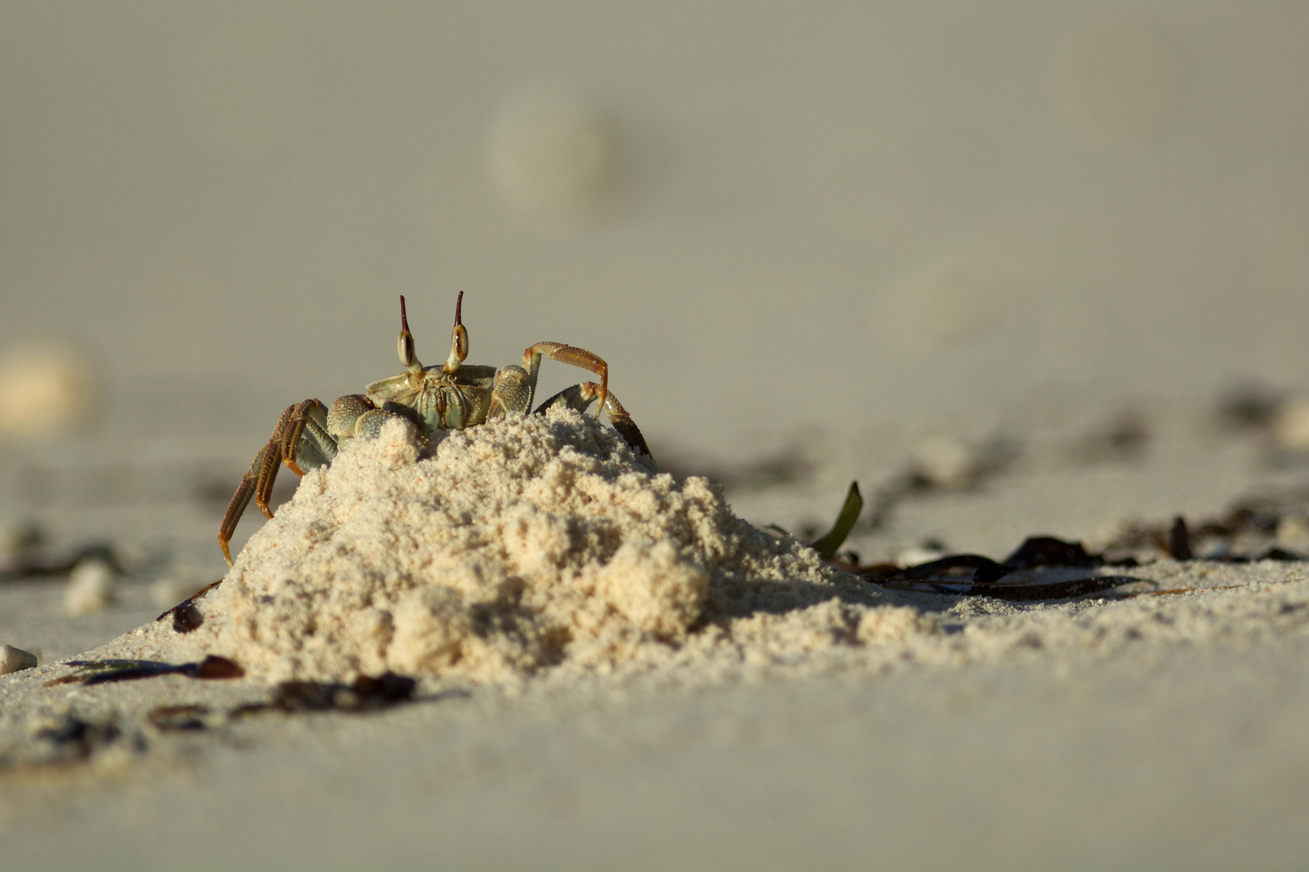 © Save Our Seas Foundation Copyright 2014 - Photograph by Rainer von Brandis