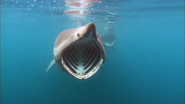 Grant for Shark Day Events | Save Our Seas Foundation