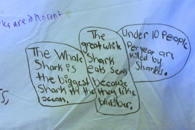 Shark facts written by students