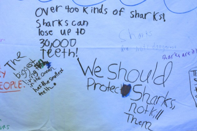 Shark facts written by 9 to 11 year olds