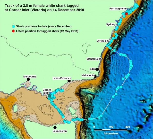 Corner inlet juvenile shark tracking points