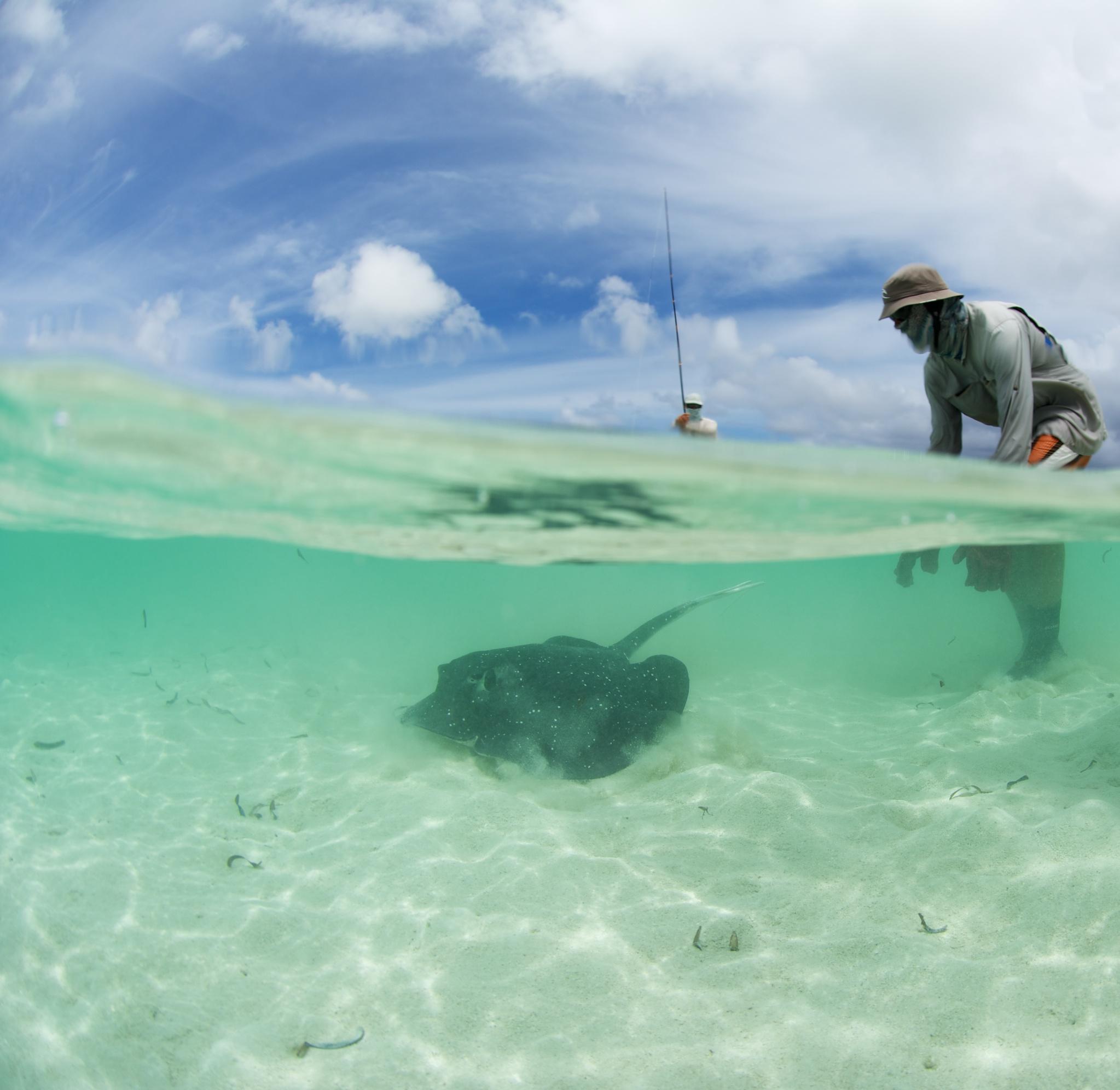 Photo by Rainer von Brandis | © Save Our Seas Foundation