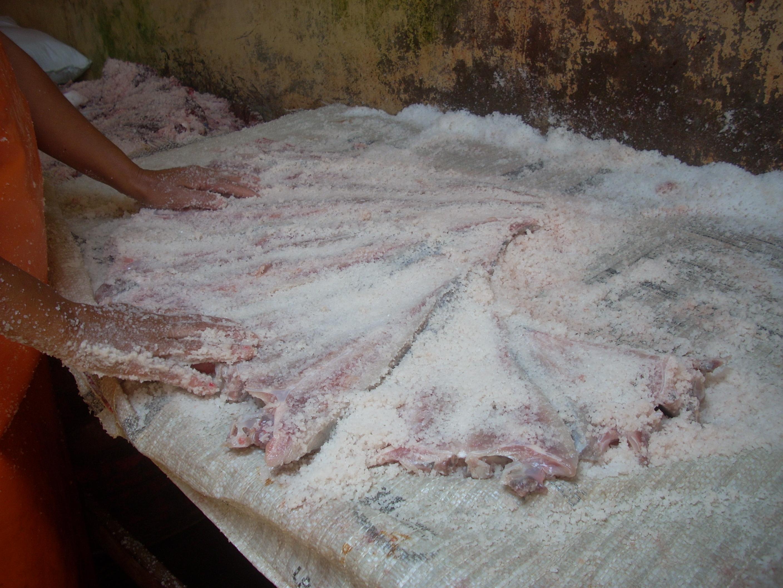 Salted Mobulid ray in San José. Lambayeque-Peru.© D. Sarmiento-APECO