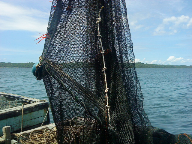 A TED in a net